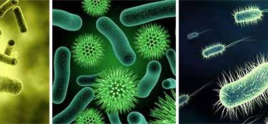 صورة تعرف على مطهر حمض هيبوكلوروس (HOCl) كمضاد قوي للميكروبات والجراثيم (Aqualife)