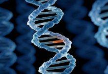 صورة إكتشاف طفرة جينية فريدة تحمي من أمراض قد تهدد الحياة
