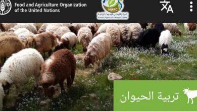 صورة الفاو والبحوث الزراعية يطلقان اول منصة لخدمة المزارعين