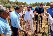 صورة يوم حقلي في البحوث الزراعية حول زراعة الكينوا